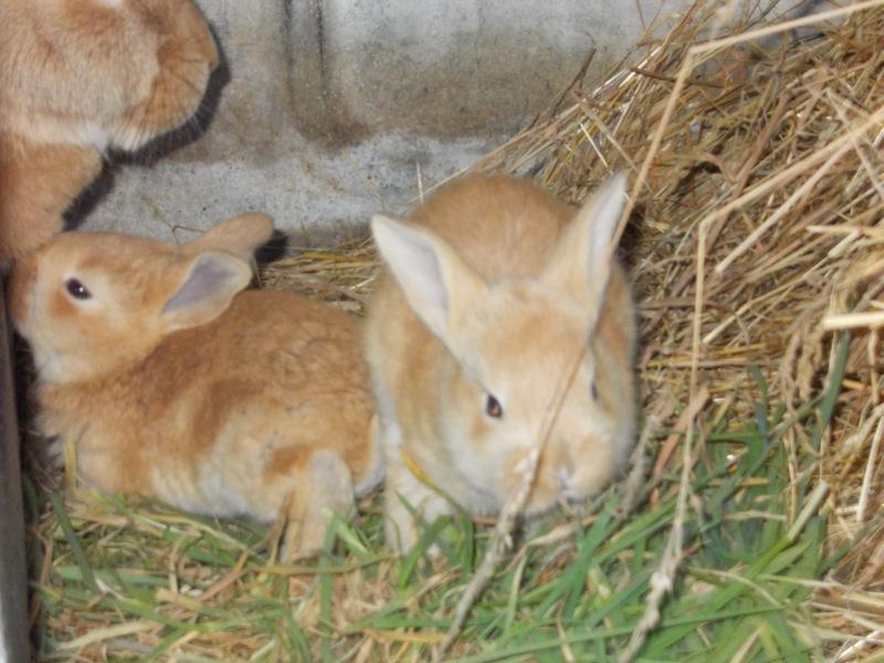 bunnies2015