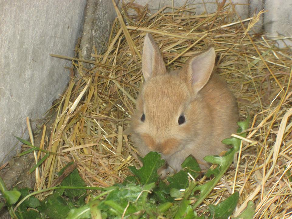 One of the latest bunnies